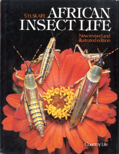 African insect life